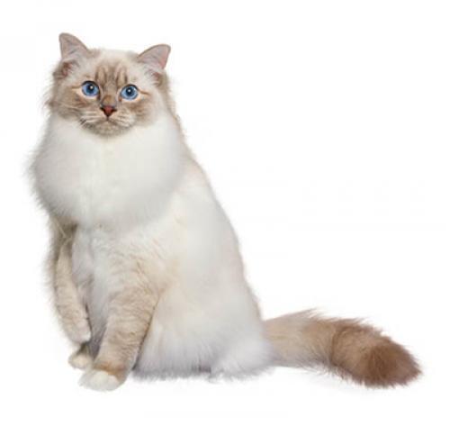 Cat to Inherit